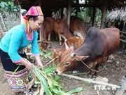 Project targeting low-income earners introduced in Ha Nam