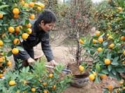 Peach and Kumquat growers optimistic for New Year season