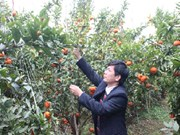Bac Giang boosts agricultural development programme