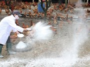 Quang Ngai destroys 12,000 A/H5N6 infected quails