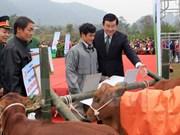Ha Giang poor families receive breeding cows