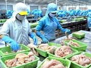 Seafood exports reach 7.9 billion USD in 2014