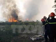 Dak Lak works to prevent forest fires