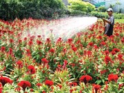 Flower sellers expecting Tet sales growth