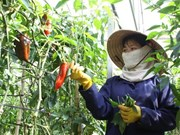 Ha Nam cooperates with Japan to develop organic agriculture