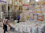 Mekong Delta exports 516,000 tonnes of rice in January