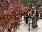 Hanoi to host 49 spring flower fairs ahead of Tet