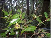 New flora species discovered in Xuan Son National Park