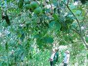 Seminar looks to promote macadamia planting