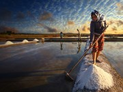 Indonesia to become self-sufficient in salt in 2017