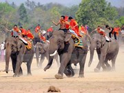 Dak Lak elephant race attracts tourists