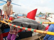 Binh Dinh's tuna fishermen urged to renovate techniques