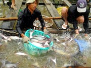 Vietnam looks to advance Tra fish processing techniques