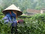 Seminar discusses ways to promote Thai Nguyen tea brands