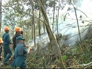 Ca Mau: 30,000 ha of forest on high fire alert