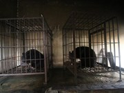 Vietnam moves to end bear captivity