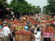 Australia to import fresh lychees from Viet Nam