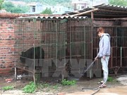 Quang Ninh to move all bears to Tam Dao Rescue Centre