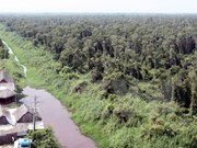 Peat reserves in southern forest roughly 13 million tonnes