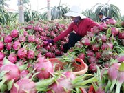 Nation needs wholesale agricultural markets