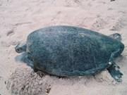 National park helps raise baby tortoises