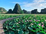 Surprisingly beautiful lotus pond in autumn