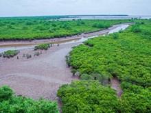 Wetland shows off wild beauty in northern Vienam