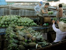 Bustling life of Cai Rang floating market