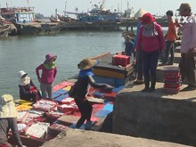 Fishery activities recover one year after Formosa incident