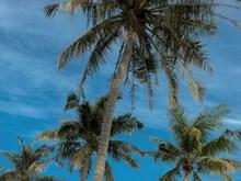 A summer holiday on Sao Beach, Phu Quoc island