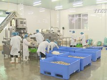 Nam Dinh exports first container of oysters to Europe