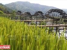 Water wheel – feature of mountainous hamlet