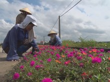 Rural women join to beautify living space