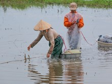 Fishing during flooding season in Hau Giang