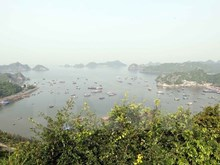 Lively experience at Cat Ba World Biosphere Reserve