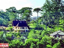 Stunning French-styled villas in Da Lat's pine forest