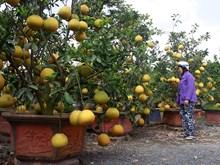 Dien pomelo- a Hanoi speciality