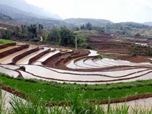 Lai Chau terraced field in rainy season