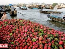 Mekong Delta region charms visitors