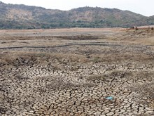 Ninh Thuan province in thirst for water