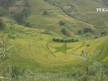 La Pan Tan ready for terraced field festival