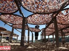 Sa Huynh seafood village in Quang Ngai province