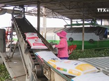 Vietnamese rice now top quality on the international market