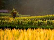 Heritage photos unveil Vietnam's hidden charm (Part 2)