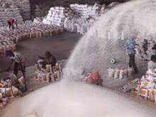 Mixed reaction amongst rice exporters over new decree