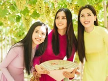 Top three Miss Vietnam 2018 join grape festival