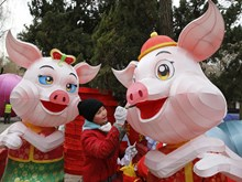 Pig – zodiac sign of Lunar New Year 2019