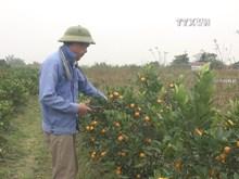 Unfavourable weather worries flower growers