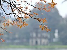 Crape-myrtle trees show off young leaves, dazzling Hanoians