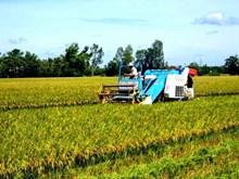 Vietnamese rice makes name in world market